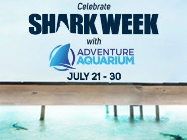 Celebrate Shark Week with discounted tickets to Adventure Aquarium