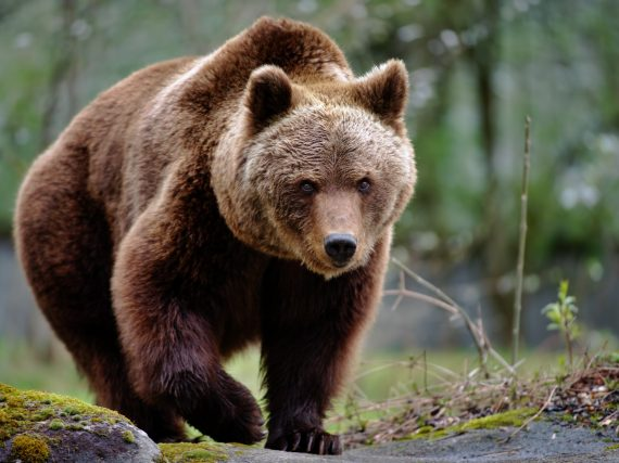 Bear education seminars and resources offered