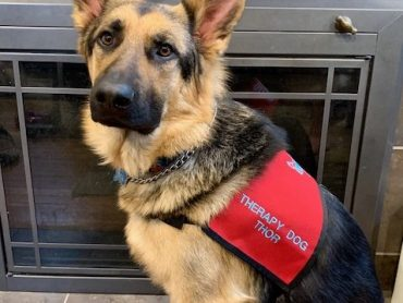 Thor the therapy dog delights, reassures Wayne students
